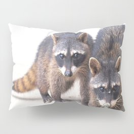 Cute wild Racoons in Costa Rica Pillow Sham