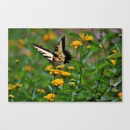 Swallowtail On Lantana Canvas Print
