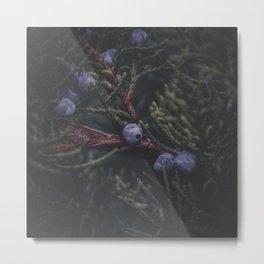 Fruits of Autumn 4 Metal Print