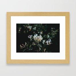 flower photography by Annie Spratt Framed Art Print