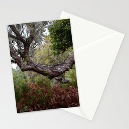 Laurisilva, the primeval forest in the midlands of Madeira Stationery Cards