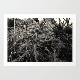HDR autumnous fallen Larix decidua black and white Art Print