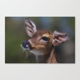 Key Deer Canvas Print