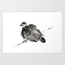 Puffed Up Art Print