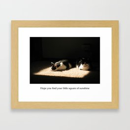 Cats lying in a square of sunshine Framed Art Print
