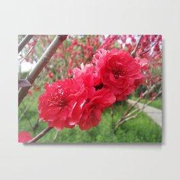 Flower Siblings Metal Print