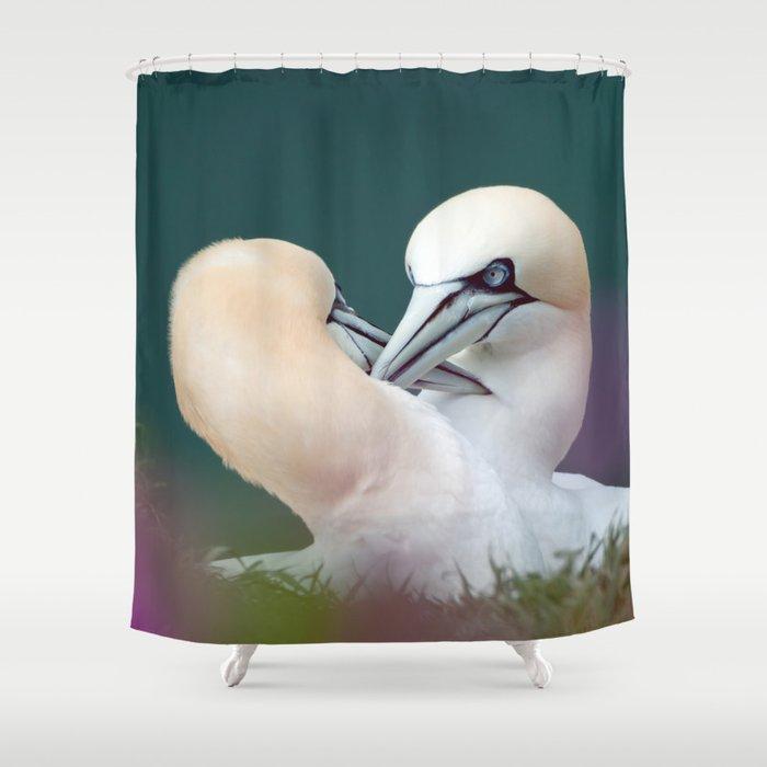 Northern Gannets (Morus bassanus) Shower Curtain