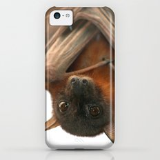 Little Red Flying Fox Hanging Out iPhone 5c Slim Case
