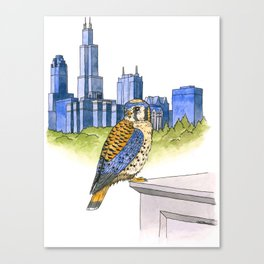American Kestrel with Chicago skyline Canvas Print