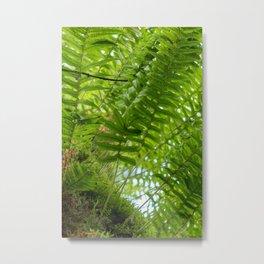 Beautiful Forest Ferns Metal Print