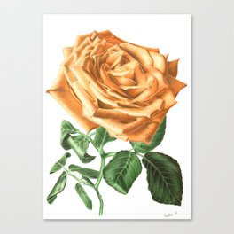 For ever beautiful Canvas Print