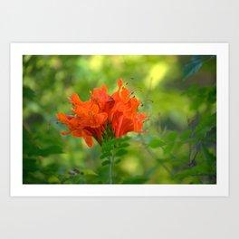 Exotic Ginger Flower Bignone 9125 Art Print