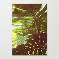 Let Light In Canvas Print