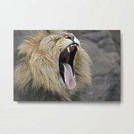 lion yawn Metal Print