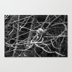 Squirrel in Black and White Canvas Print