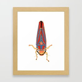 Candy-striped Leafhopper  Framed Art Print