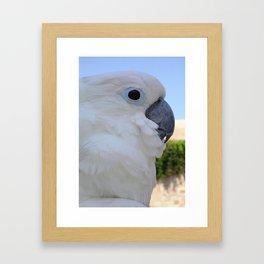 Side Portrait Of A Blue-Eyed Cockatoo Framed Art Print
