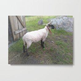 Cuddly Lamb Metal Print