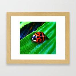 Ladybug on Leave Framed Art Print