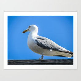 Silly Seagull Art Print