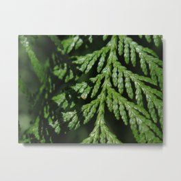Pointe Evergreen 74 Metal Print