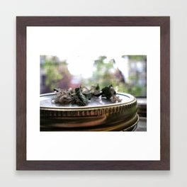 Flower on a Jar Framed Art Print