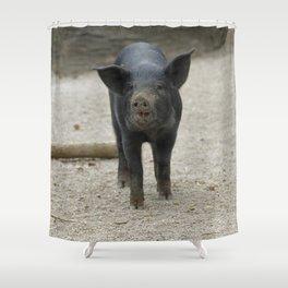 Pig_2015_0401 Shower Curtain