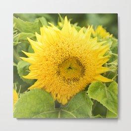 Teddy Bear Sunflower Alternate Perspective Metal Print
