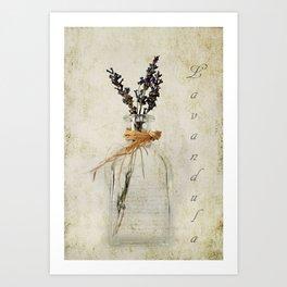 Lavandula / Lavander Art Print