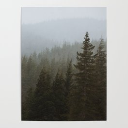 Snowy Forks Forest Poster