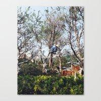 nan lawson Canvas Prints featuring Pruning in Nan Lian by Diana Basto Ferreira