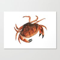 crab Canvas Prints featuring Crab by Trinity Mitchell