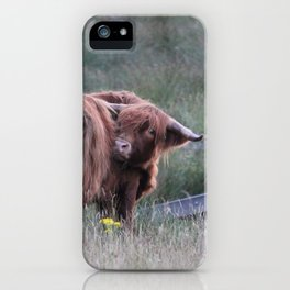 Highland Cow Scratching Itself iPhone Case
