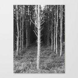 Tree Perspective Canvas Print