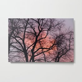 Winter trees with pink sunset Metal Print