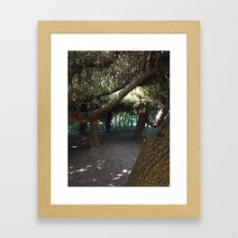 Inside tree cave at Kubota Garden Framed Art Print