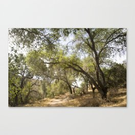 Follow The Tree Lined Trail Canvas Print