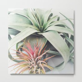 Air Plant Collection III Metal Print