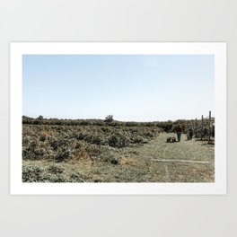 Apple Fields III Art Print