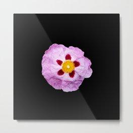 Purple flowers 7 Metal Print