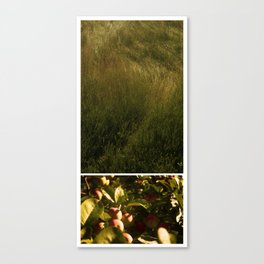 I dreamt of the path to the apple trees Canvas Print