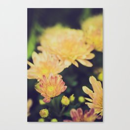 Chrysanthemum Impressionism Canvas Print