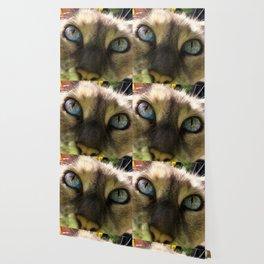 Cat's Eye Spy Wallpaper