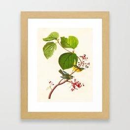 Pine Swamp Warbler Bird Framed Art Print