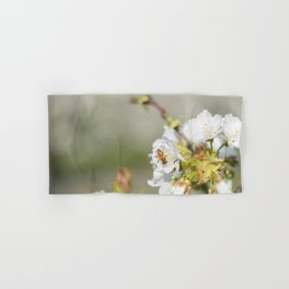 Bee laid on white flowers of a cherry tree Hand & Bath Towel