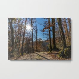 A beautiful day in the woods Metal Print