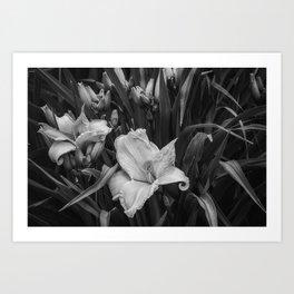 Orange Daylilies bw Art Print