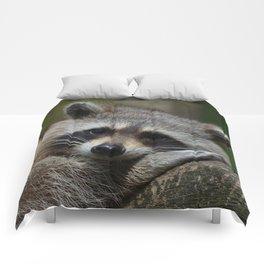 Lovely Raccoon Comforters