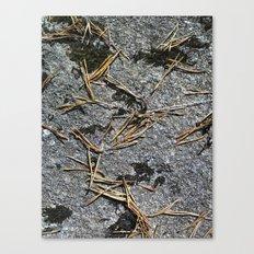 fir needle on a rock Texture Canvas Print