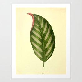Vintage Botanical illustration, 1867 (Leaf) Art Print